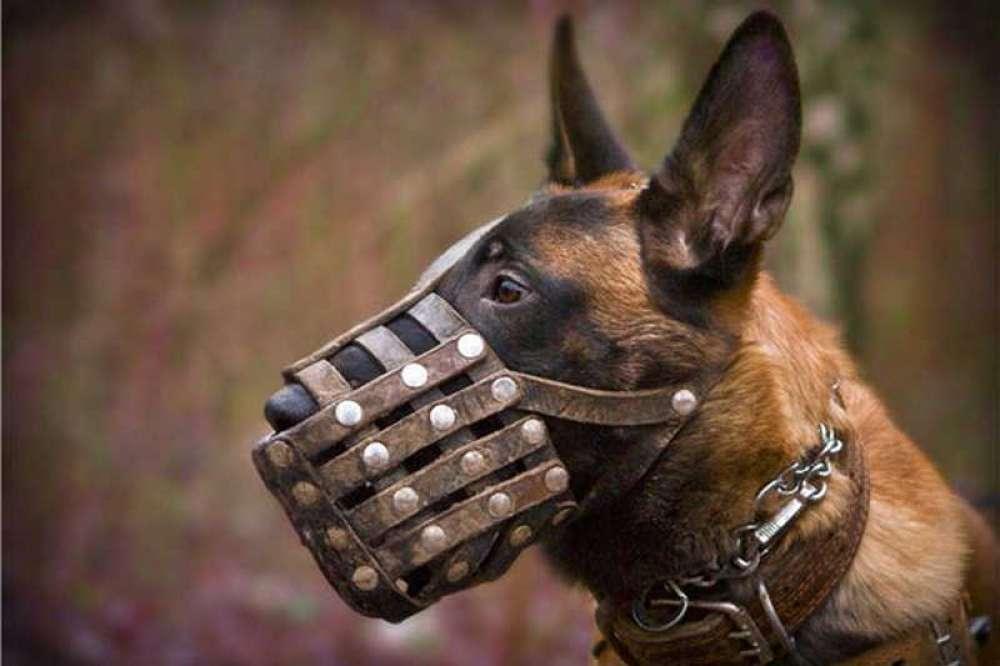 Где по закону разрешено выгуливать собак в городе