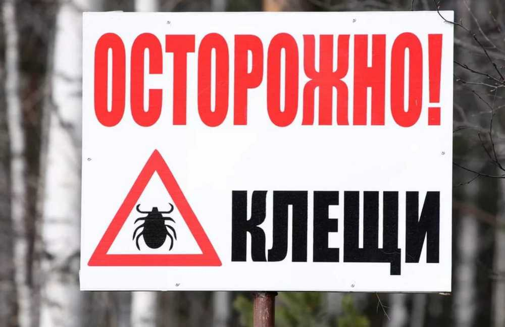 1-ый укус клеща зафиксирован вКрасноярске