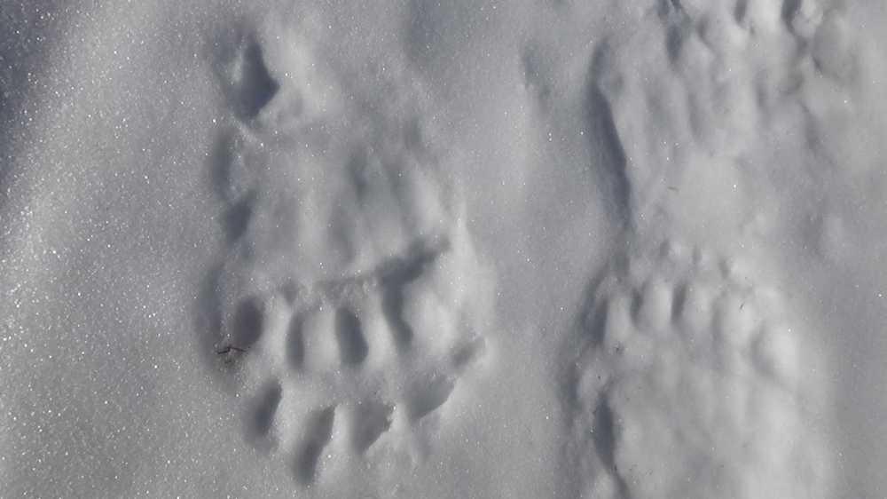 Камчатские медведи начали выходить изберлог после зимней спячки