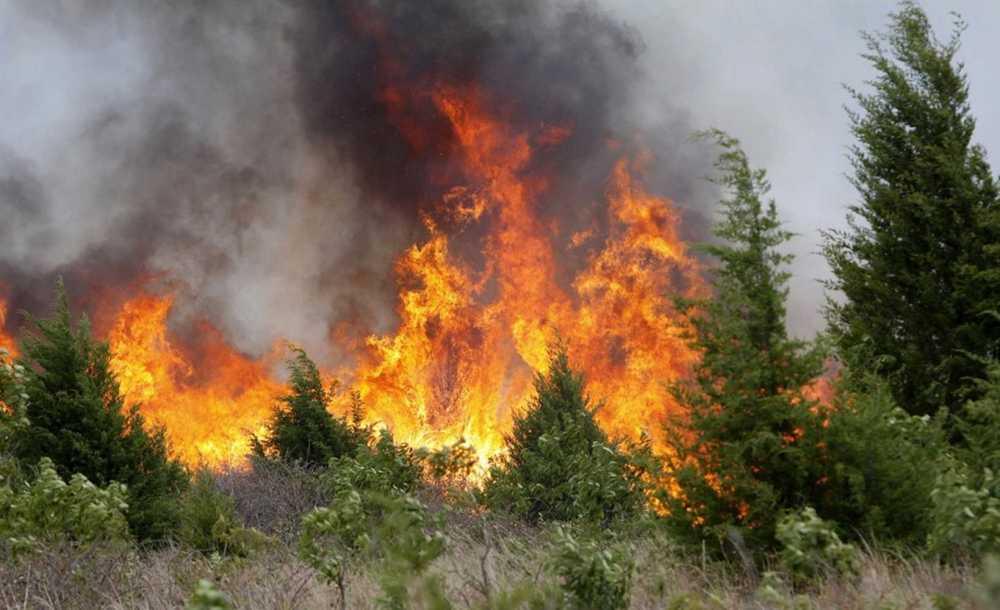 ВКрасноярском крае полыхает неменее 4 тыс. гектаров леса