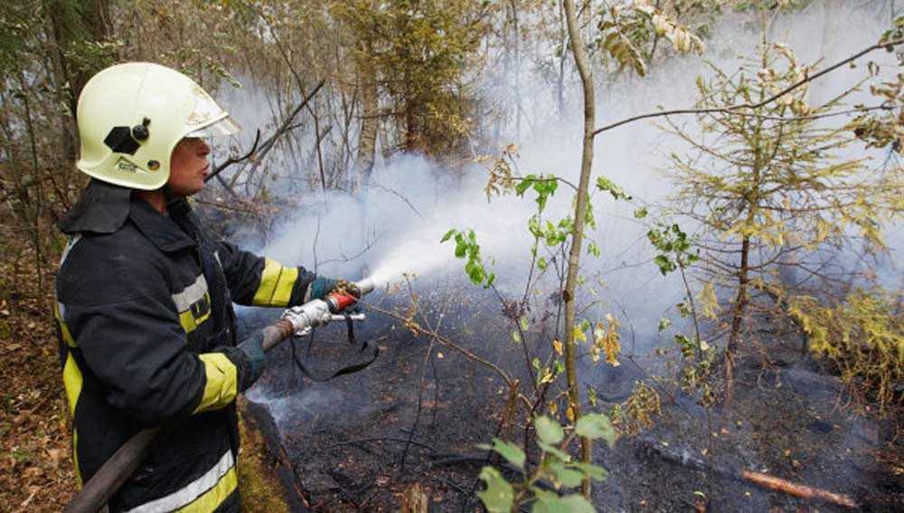ВКрасноярском крае действуют 24 лесные пожара