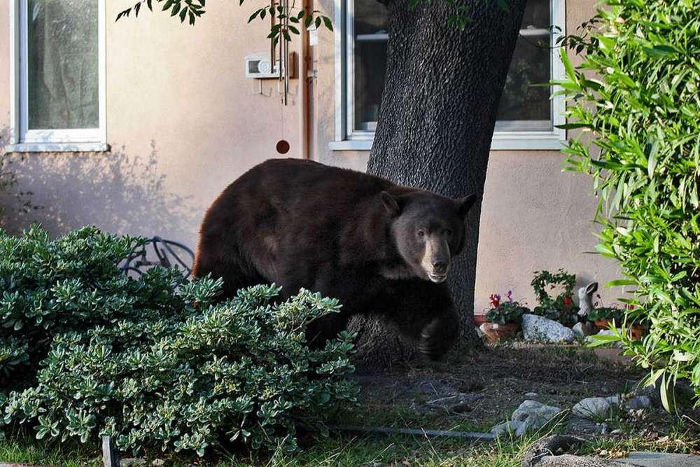 Наостановку автобусов вКрасноярске вышел медведь