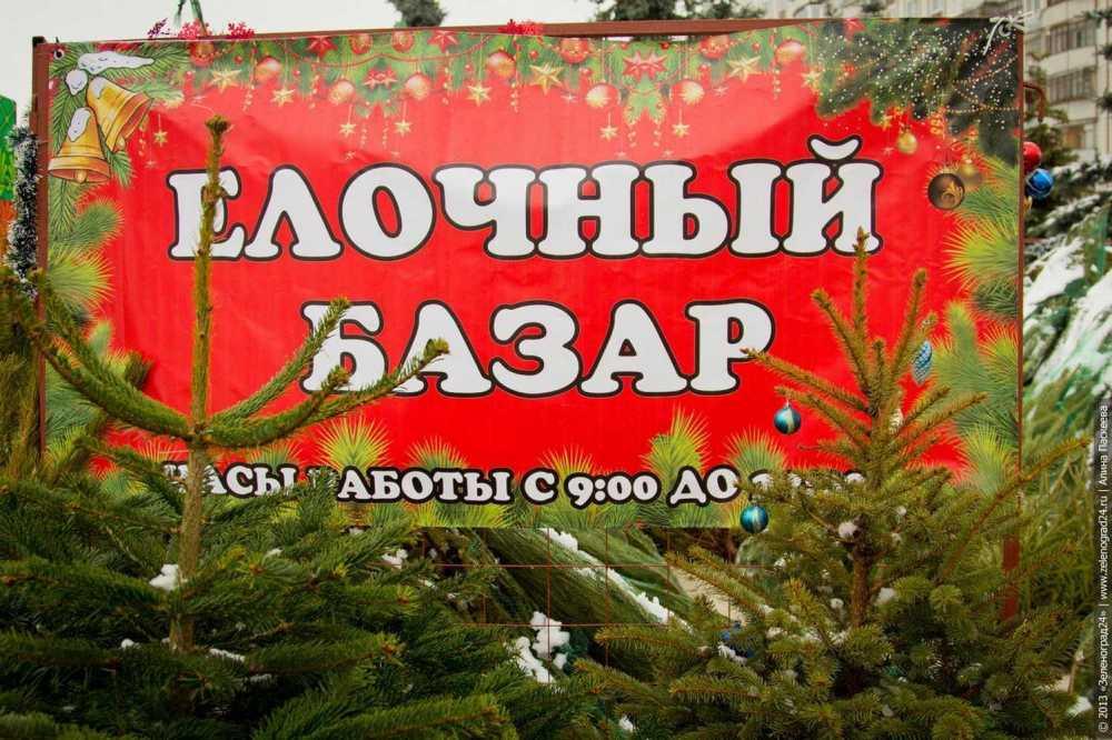 Вгородах ирайонах края лесные инспекторы начнут проверки елочных базаров