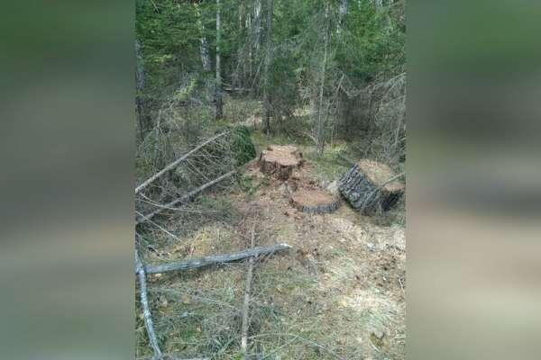 В Курагинском районе полицейские задержали «черных» лесорубов
