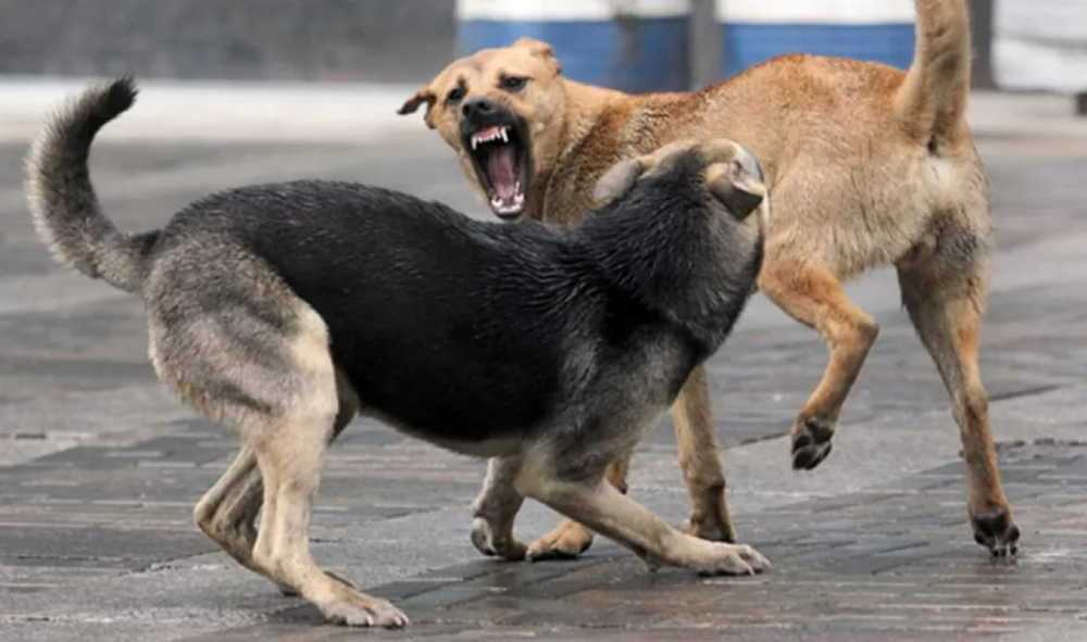 ПоКрасноярску бродят собаки которые напали надевочку